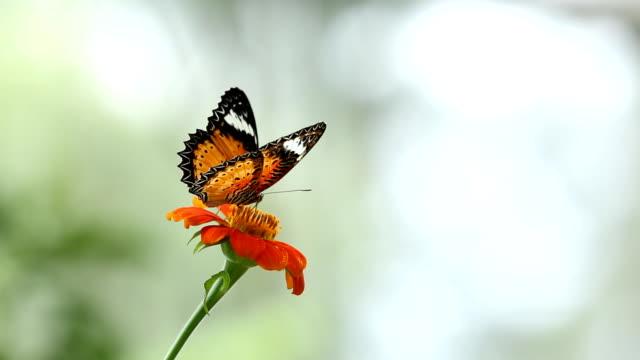 モナーク蝶、花 - 動物の色点の映像素材/bロール