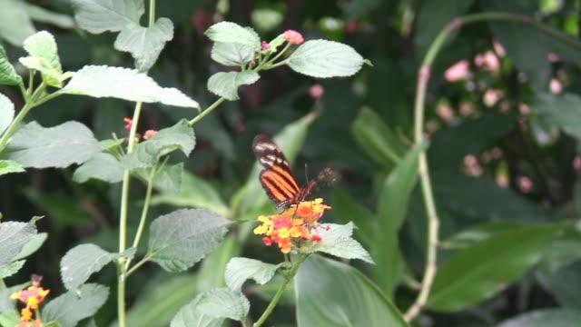 vídeos de stock e filmes b-roll de borboleta-monarca - invertebrado