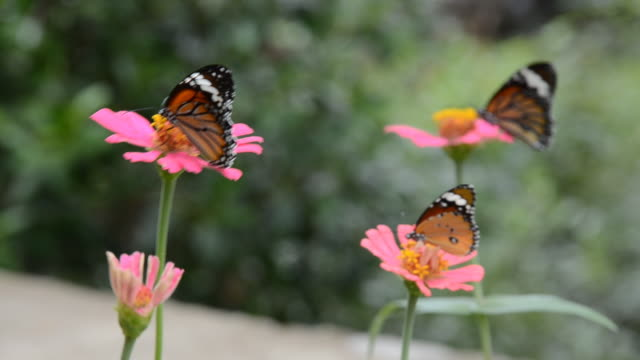 monarch butterfly - four objects stock videos & royalty-free footage
