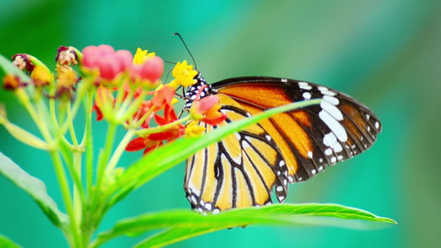 monarch butterfly - bright colour stock videos & royalty-free footage