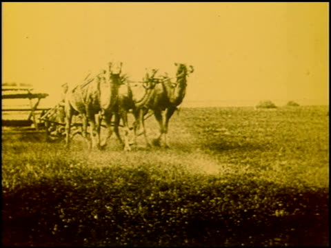 vidéos et rushes de monarchs of the plains - 3 of 4 - grandes plaines américaines