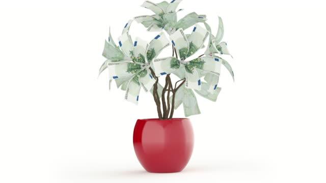 vídeos de stock, filmes e b-roll de árvore de dinheiro em branco. versão euro - planta de vaso