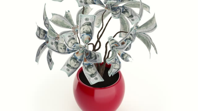money tree - potted plant stock videos & royalty-free footage