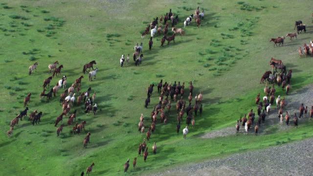 stockvideo's en b-roll-footage met mongolia : herds of horses in the mountain next to the river - mongolië