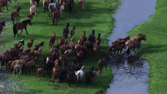 mongolia : herds of horses in the mountain next to the river - independent mongolia stock videos & royalty-free footage