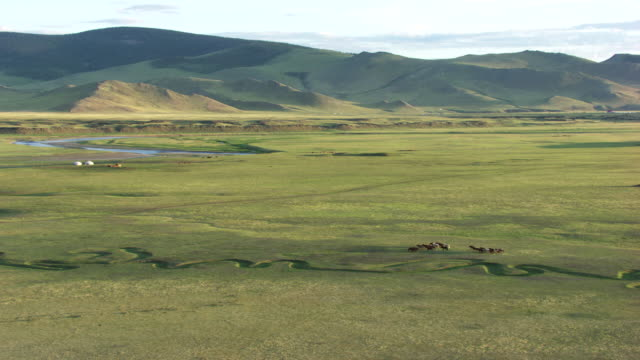 mongolia : herds of horses in the mountains - mongolei stock-videos und b-roll-filmmaterial