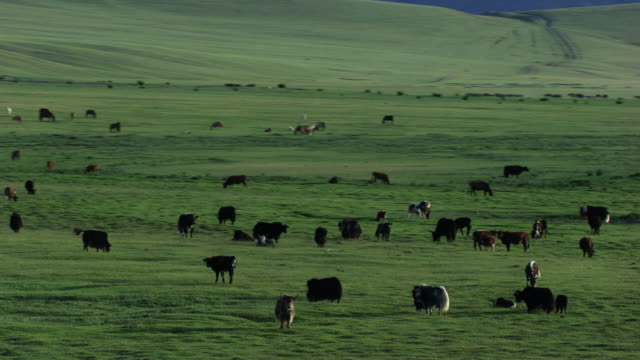 stockvideo's en b-roll-footage met mongolia : herds of horses in the mountains - mongolië