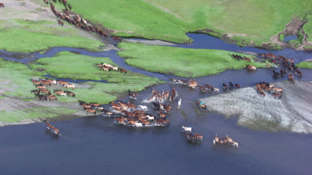 stockvideo's en b-roll-footage met mongolia : herds of horses next to the river - mongolië