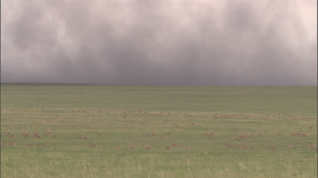 stockvideo's en b-roll-footage met mongolian gazelle herd and wildfire smoke on steppe, mongolian steppe - steppe