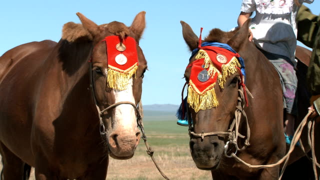 mongolian horses wearing traditional decoration - nomadic people stock videos & royalty-free footage
