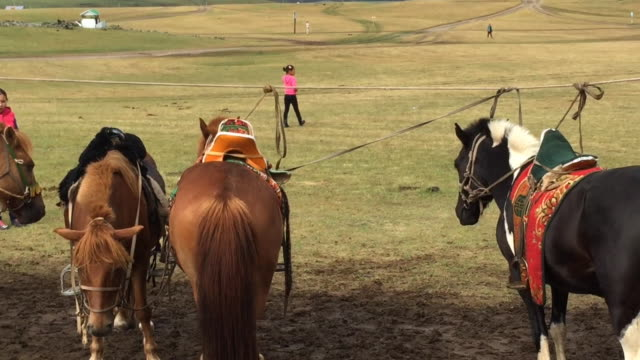 mongolian young people taking care of horses at orkhon valley cultural landscape in mongolia - arbeitstier stock-videos und b-roll-filmmaterial