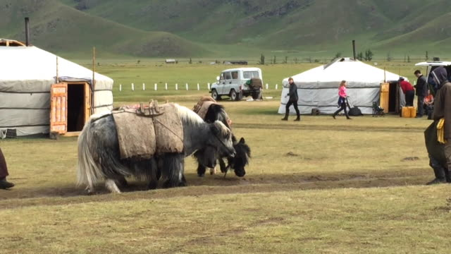 mongolians with a few yaks at a yurt camp at orkhon valley in mongolia - 遊牧民族点の映像素材/bロール