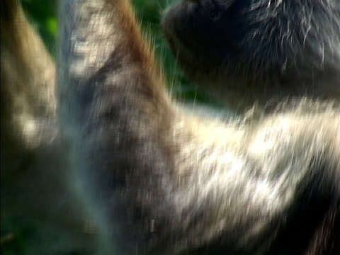 monkey at zanzibar - zanzibar archipelago stock videos & royalty-free footage