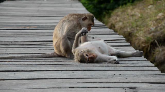 monkey behavior - flea insect stock videos and b-roll footage