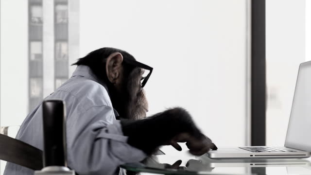 stockvideo's en b-roll-footage met monkey business office - overhemd en stropdas