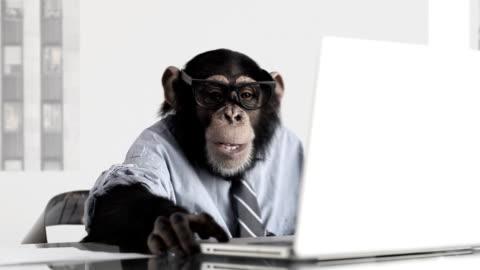 monkey business office - monkey stock videos & royalty-free footage