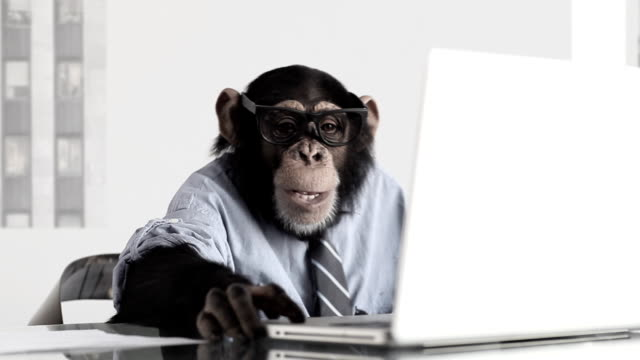 monkey business-büro - humor stock-videos und b-roll-filmmaterial