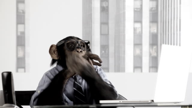 monkey business office - applauding stock videos & royalty-free footage