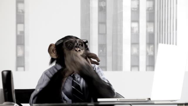 stockvideo's en b-roll-footage met monkey business office - applaudiseren