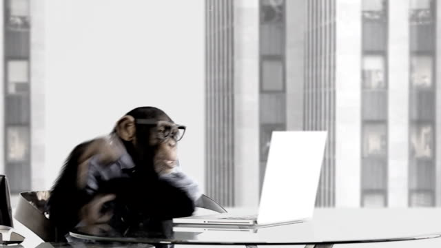 monkey business office - monkey stock videos & royalty-free footage