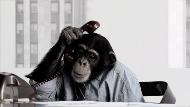 monkey-business-office-video-id185423305