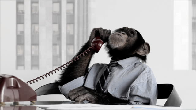 monkey business office - boredom stock videos & royalty-free footage