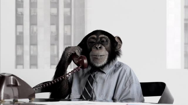 stockvideo's en b-roll-footage met monkey business office - communication problems