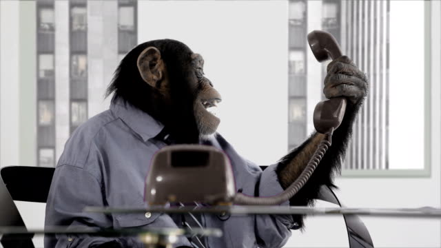 monkey business office - chimpanzee stock videos & royalty-free footage