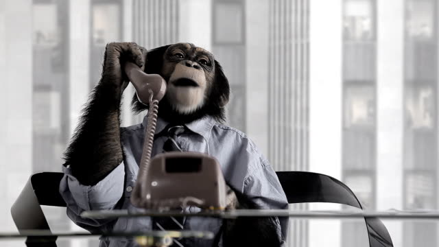 monkey business office - primate stock videos and b-roll footage