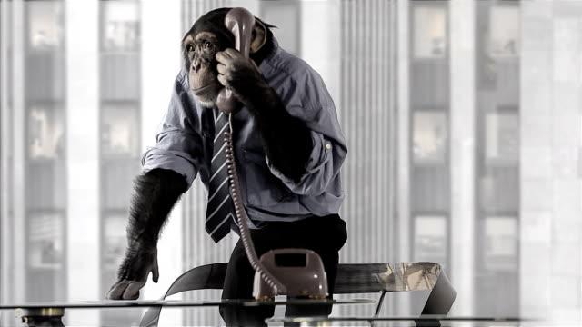 vídeos de stock, filmes e b-roll de macaco de escritório - personas de negocios