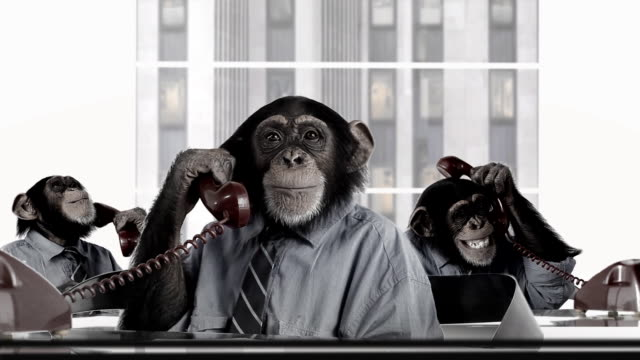 monkey business-service - humor stock-videos und b-roll-filmmaterial