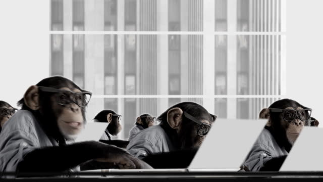 stockvideo's en b-roll-footage met monkey business team - humor