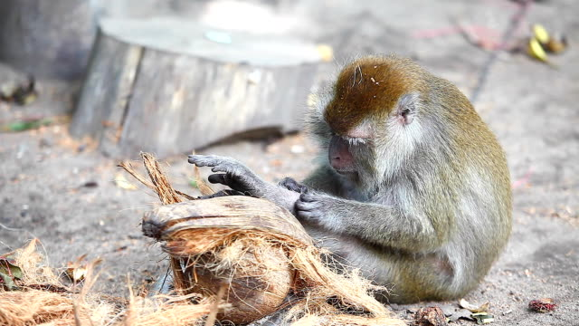monkey clean her fleas - flea insect stock videos & royalty-free footage