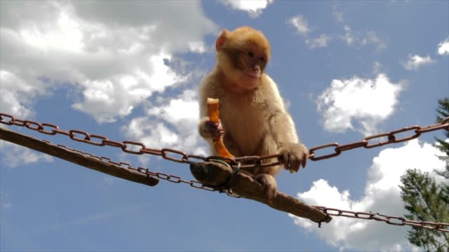 monkey climbing on climbing frame with sky background - climbing frame stock videos & royalty-free footage