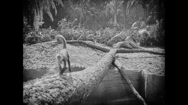 1925 monkey crosses makeshift tree bridge - 1925 stock videos & royalty-free footage