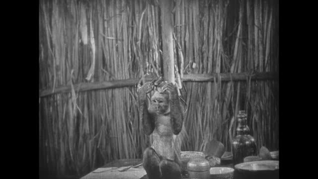 1925 a monkey dances and plays with a pair of spectacles - 1925 stock videos & royalty-free footage