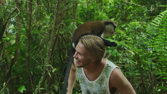 monkey eating banana standing on back of tourist man / grand etang national park, grenada - one animal点の映像素材/bロール