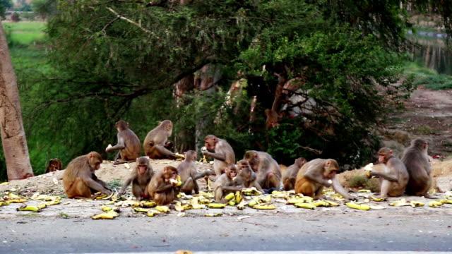 affen essen banane - neuweltaffen und hundsaffen stock-videos und b-roll-filmmaterial