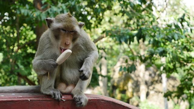 Monkey eating ice cream.