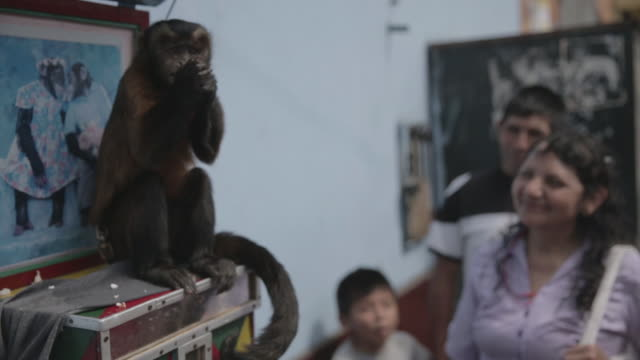 vídeos de stock, filmes e b-roll de monkey eats for people on street, medium shot - artista