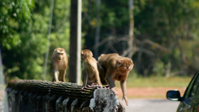 Monkey family at khao yai national park Thailand