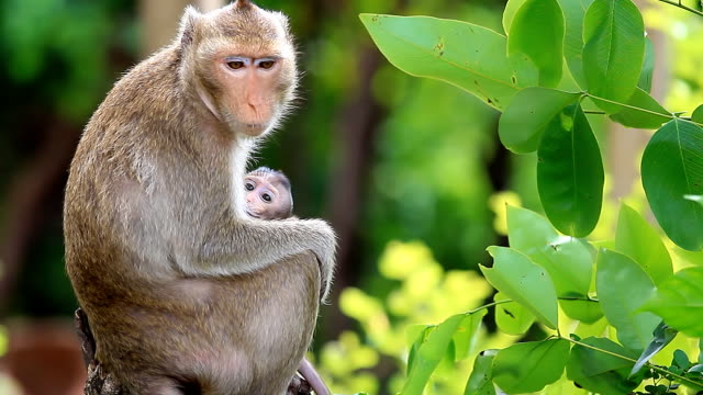 monkey family. - south america stock videos & royalty-free footage