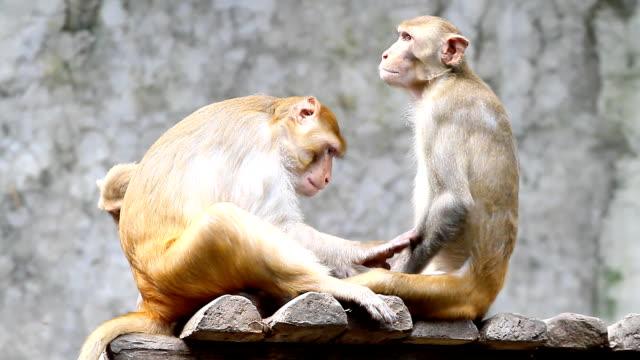 monkey familie - neuweltaffen und hundsaffen stock-videos und b-roll-filmmaterial