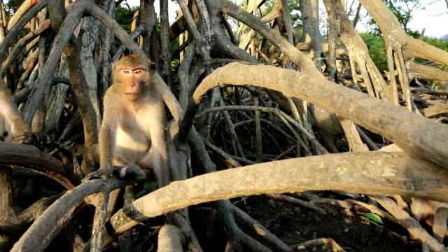 monkey family - family tree stock videos and b-roll footage