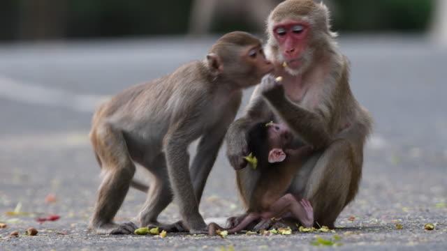 4K: Monkey Family
