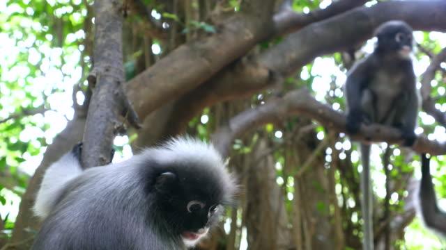 Monkey in a wild