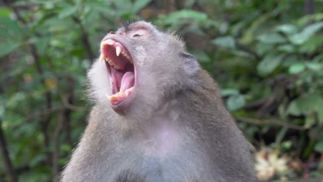 vídeos y material grabado en eventos de stock de mono en el bosque - protección de fauna salvaje