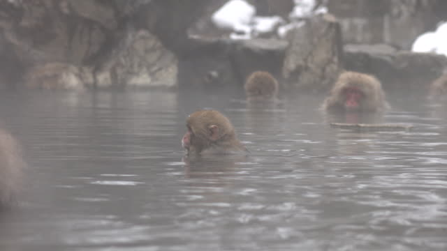 monkey in hot spring - macaque stock videos and b-roll footage