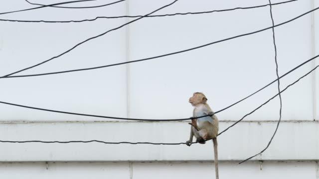 stockvideo's en b-roll-footage met aap in de stad. - schommelen bungelen