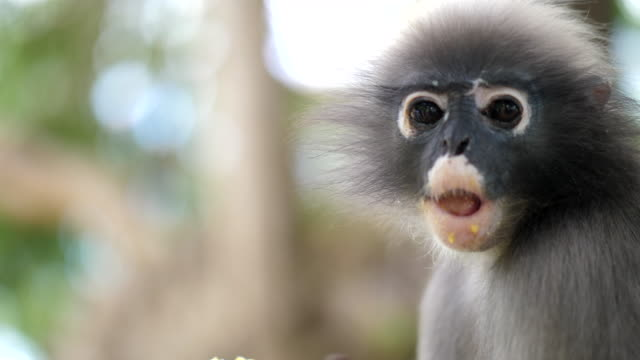 monkey in the forest - cute stock videos & royalty-free footage